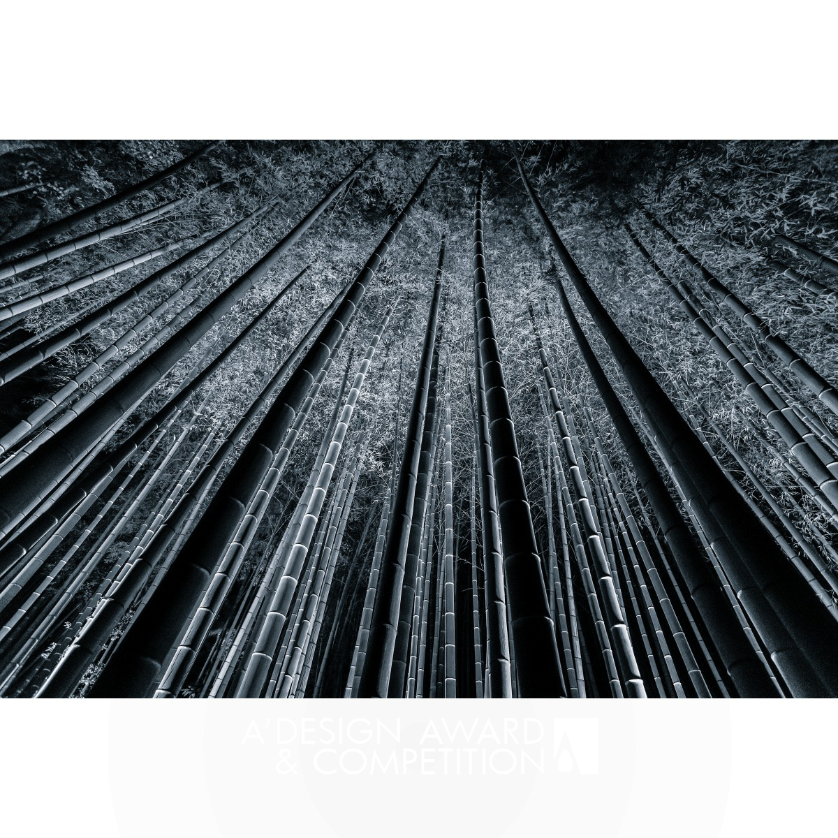 Bamboo Forest Fine Art Photography