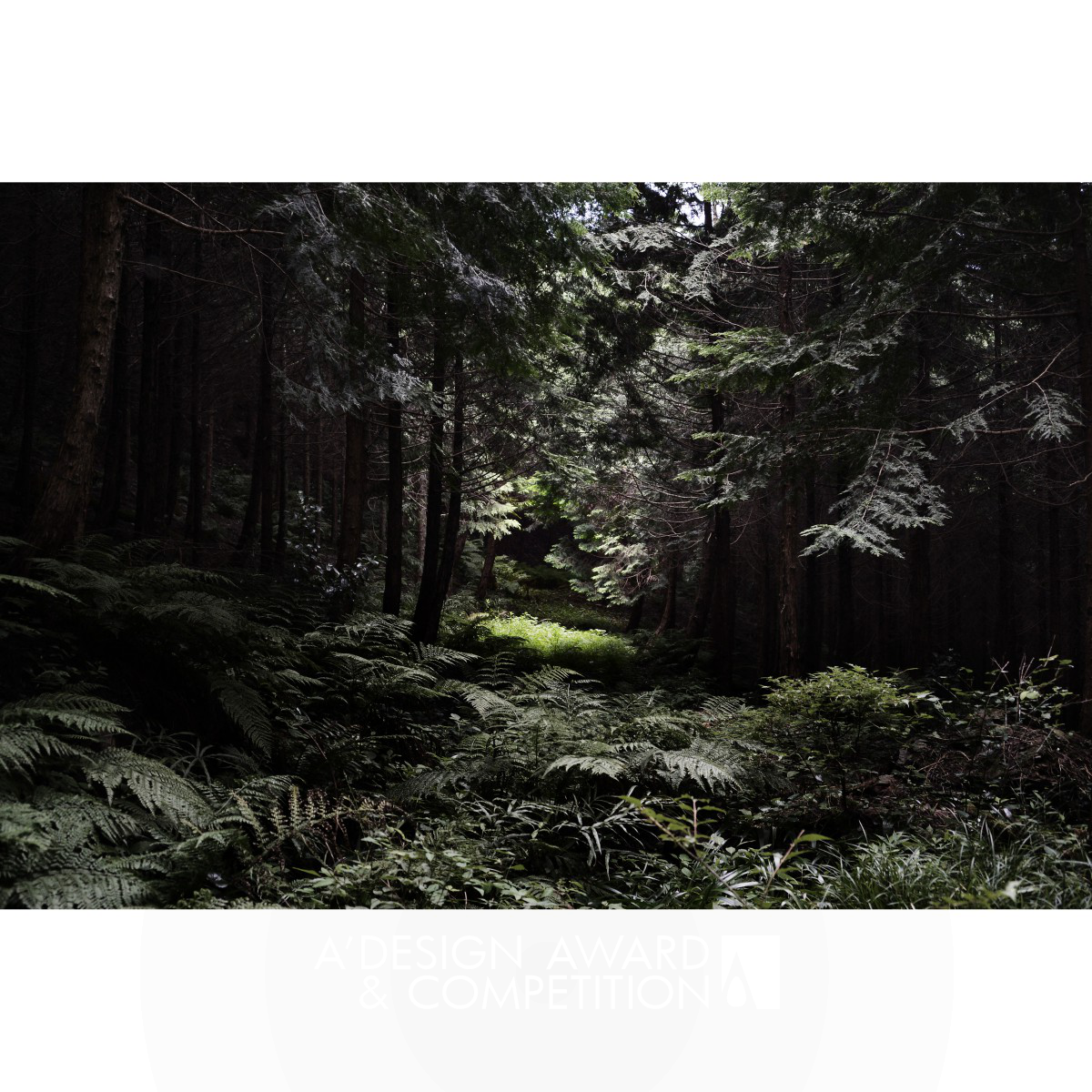 The Japanese Forest Photography