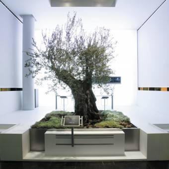 Ueberholz Olive tree Booth