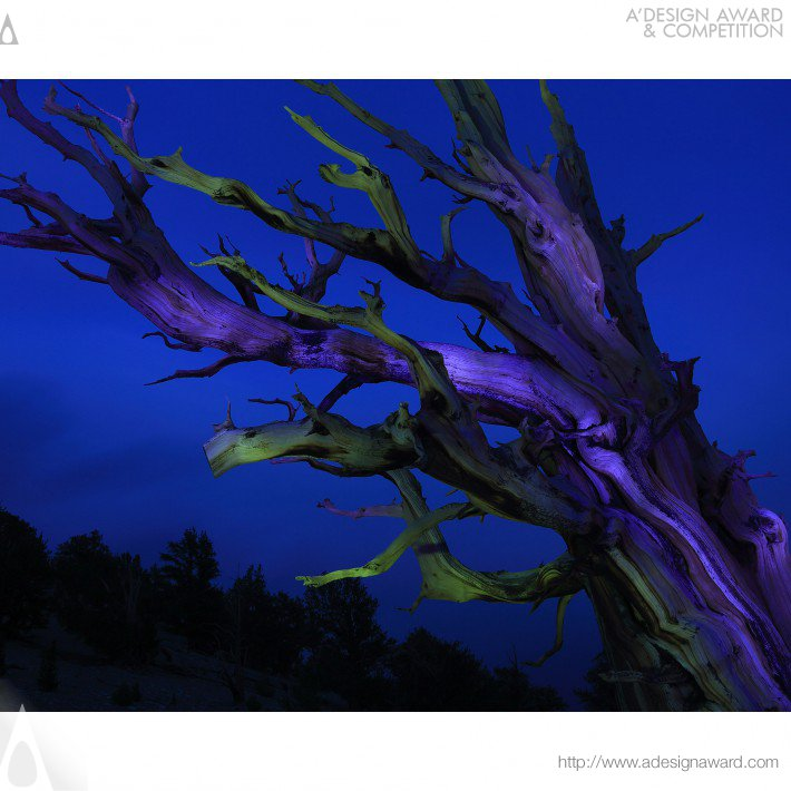 Sacred Trees (Photograph Design)